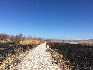 Reeds burning Struga