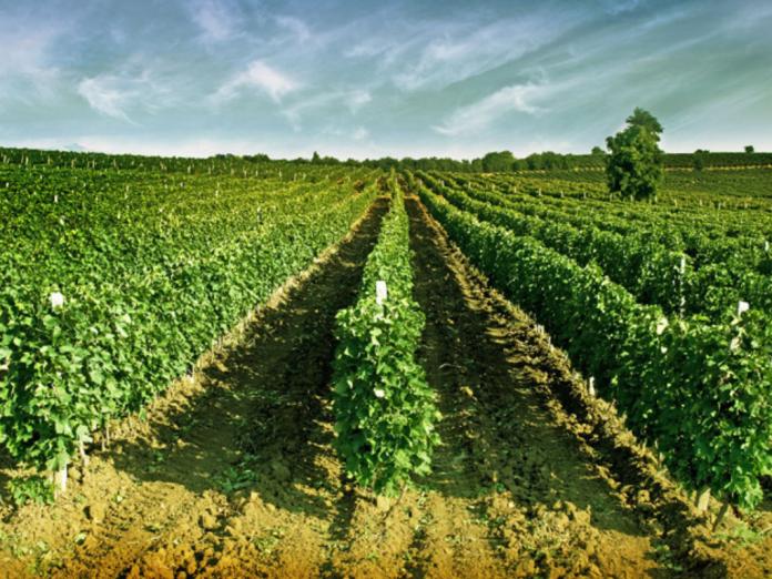 Stobi Winery Macedonia